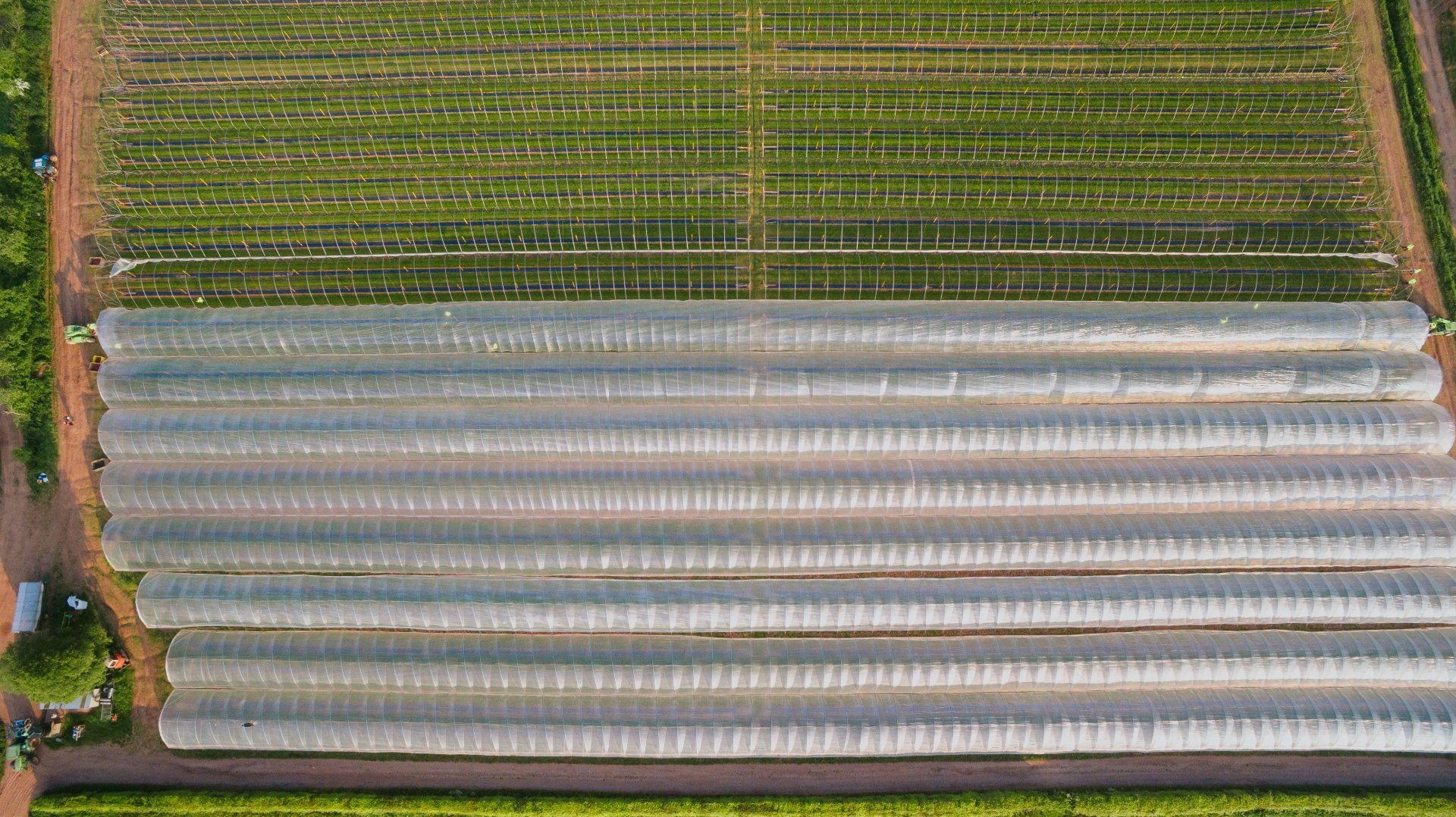 An Aerial photograph of the vast scale of Wind Mill Hill Fruits farm, showing the commercial capabilities of British Frozen Fruits.